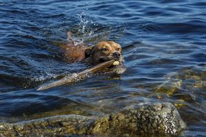 Hunden Mimsy tycker också om att bada.