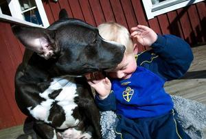 Puss. Bodil ger Isak en vänskaplig puss. Hon älskar människor och djur.