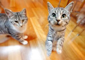 Kattungarna är nyfikna på allt.