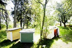 Bisamhälle. Här, vid Södra koloniområdet i Gävle har Matias Köping sju bisamhällen.