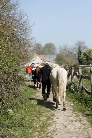 Dags att sadla hästarna inför den tre timmar långa ritten. Foto: Johan Croon/TT