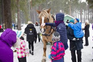 Populärast på vinterfestivalen var nog hästen Berta.