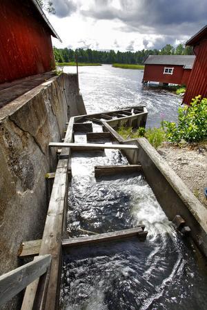 Vid nystarten för kraftverket 1994 byggdes också en laxtrappa bredvid dammen för att möjliggöra fiskvandring, men den fungerar inte.