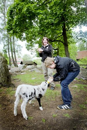 SNABBMAT. Anton Degerfeldt, 12 år, Umeå, matar lammungen Yngve. Men det gäller a tt vara snabb Yngve gillar inte att dra ut på måltiden