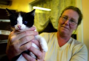 """Söker fosterhem. Kattmamman Moni och ungarna David, Petra, Kim och Lasse behöver någonstans att bo under ett par månader. """"Ungarna behöver mycket mer mänsklig kontakt än vi har tid att ge dem"""", säger Anne Pettersson på katthemmet."""