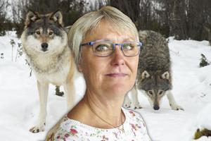 Ruona Burman på Länsstyrelsen avfärdar Svenska rovdjursföreningens  kritik.