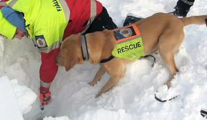 – Ska jag verkligen ner dit? undrar hunden Fly. Hundföraren Peter Schmitt försöker övertyga.