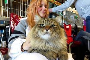 Maya Eriksson från Sundsvall med Julle som fyller tre år 30 juli. Han är en sibirisk katt och importerad från Ryssland.