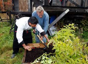 Kockarna Marcus Allström och Tommie Brandt började tävlingen med att plocka potatis, odlade i låda.– Enormt fina knölar, tyckte de.Foto: Jan Andersson