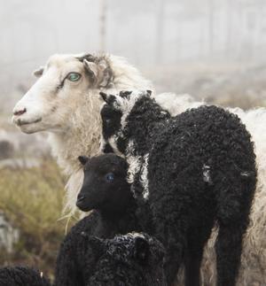 När det är lite småruggigt väder trivs djuren som bäst.