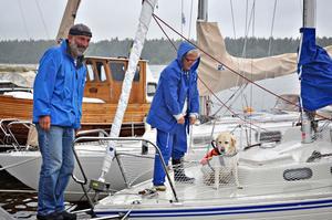 """Båthund. Åttaåriga labradortiken Wilma är van vid att vara med ute på havet. """"Hon älskar att åka båt och kliver både på och av helt själv"""" berättar husse Roland Jansson, från Enånger, som tillsammans med frun Yvonne stannat till i Ängskär för en paus i seglatsen."""