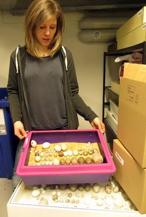 Ida Leckström visar en del av de samlingar som tagits i beslag.