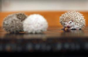 Sammanlagt sju ungar finns nu i Hissmofors. De lever gott av den kattmat de får av matte.