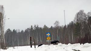 På onsdagsförmiddagen gick först de två älgarna  över E 16 med sikte mot Rågsvedens sågverket. Med lite vild fantasi kunde man lätt tro att älgarna läst på skylten intill järnvägsspåret.