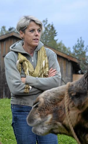 Ovanliga djur. Inger Haglund har tre kameler på familjens gård i Viker.