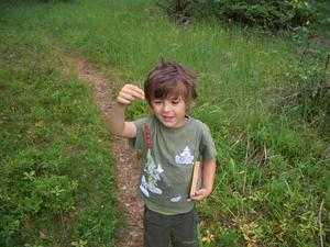 Smultron på ett strå och en gammal Kalle Anka pocket hittad på utedasset. Barnbarnet Audun fick ett strå varje morgon på hundrundan.