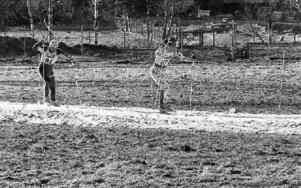 Svenska Skidspelen den 11 mars 1989 med ingen snö i terrängen, bara en ihopskottad snösträng. På bilden ses Dala-Järnas (och Sveriges) Lars Håland vinna 30 km. Foto: Mikael Forslund