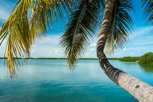 Enligt somliga är Key West himmelriket på jorden.