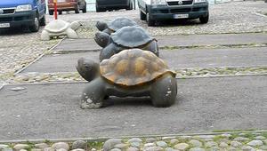 Tro det eller ej men sköldpaddorna hade egna parkeringsrutor!!