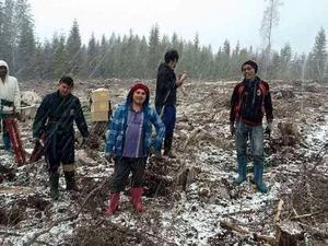 Skogsarbetarna satte plant åt Holmen skog, via underentreprenören Botnia skog.