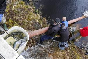 21 maj 2015. Ett ton ny fisk i Abborrtjärn och Akerstjärn. Ytterhogdals fiskområde satte ut öringar och regnbåge inför sommarens fiske.