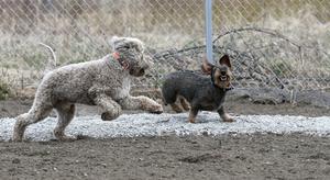 Marit menar att en hundrastgård fyller flera syften; hundar får leka av sig och hundägare får nya vänner.