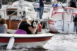 Många, människor som fyrbenta, gav sig ut på sjön på lördagens Runndagar.