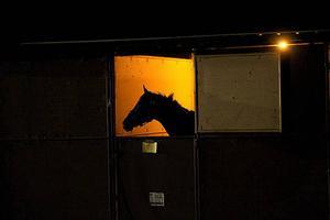 Kvinnan som såg hästen har gjort en polisanmälan om djurplågeri. Djuret på bilden har inget samband med texten.