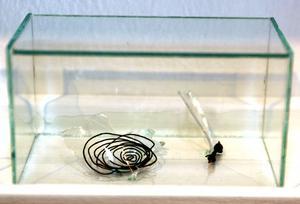 Kalaskross i kub. Mari Jäderberg Vasdekis återvinner resterna efter vilda barnkalas.