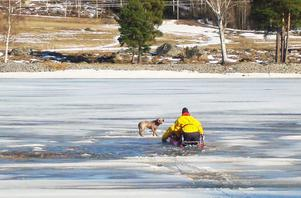 Här är räddningen på väg till den nödställda hunden.