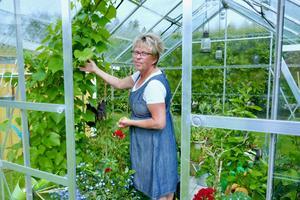 Laila Westling tillbringar mycket tid i sitt växthus, som rymmer vindruvor, kryddor, tomater, slanggurka, västeråsgurka och squash. Persilja har ett stort utrymme.