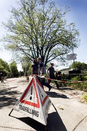 SJUKDOMEN SPRIDS. Almen vid Gustavsbrorondellen sågades ner under onsdagen. Ytterligare en alm sågas ner i Regementsparken under torsdagen och fler träd kan vara drabbade.