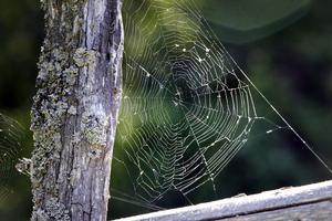 Det är gott om djur vid Gårdskärs kust. Från de minsta trollsländorna och spindlarna till de större.