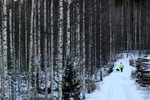 Frusen björkskog i landet som snart firar 100 år av självständighet. Foto: Matthias Schrader