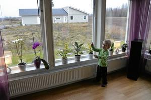 Kollar. Theodor spanar ut. I framtiden får familjen fler grannar.