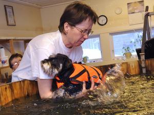 Berit Bodin är certifierad fysioterapeut för hundar. Nu ska dvärgschnauzern Ebba simträna, något som är viktigt när hon är nyopererad.