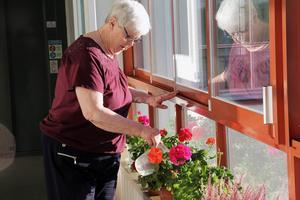 Barbro Berg har även andra blommor som hon med van hand sköter om.