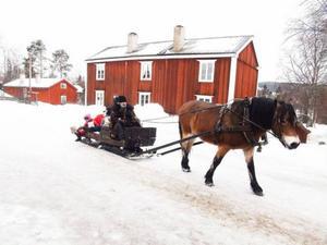 Örjan Ström satt bakom tömmarna på en av de slädekipage som trafikerade Jamtli på söndagen.