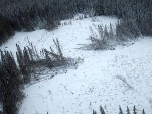 SCA flög över tre kommuner på torsdagen och noterade att stormen Hilde fällde en hel del skog i Krokom.