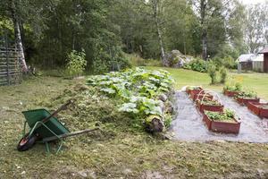 Komposthögen blir såplats för squashplantor under sommaren. Praktiskt och dekorativt. I de röda sålådorna sätter Berit plantor som är på tillväxt eller som behöver utvärderas innan de får en plats. Små barnkammare, helt enkelt.