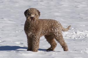 Massimo älskar att rulla runt och busa i snön!