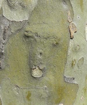 Trädstam som med fantasins hjälp har ett djuransikte. Vi promeneradei centrala Barcelona, då jag plötsligt tyckte mig se en tydlig formationav ett djuransikte i barken på ett träd. Kameran finns för det mesta nära till hands och det gav mig detta minne.