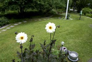 Dalian blommar på hösten.