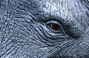 JAGAD. Arbetet med elefanten på Naturhistoriska museet i Göteborg blev slutet för äventyraren, konservatorn och naturfilmaren David Sjölander som Mattias Hagberg har skrivit en roman om.
