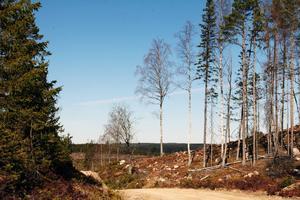 Vindkraftprojektet Hälsingeskogen innebär att 83 vindkraftverk med en totalhöjd på 220 meter kan komma att byggas på Alfta finnskog.