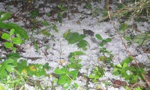 Denna hög med hagel fann läsaren Katrin Fängström på Degersjöberget mellan Junsele och Grundtjärn i dag.