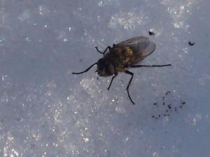 Ett vår tecken, när insekterna börjar komma fram