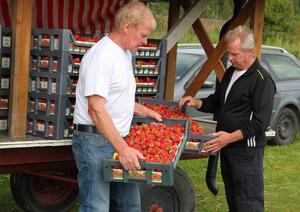 Nu har Bröderna Ljungberg börjat med försäljningen av de egna jordgubbarna.