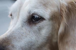 De båda glykolförgiftade hundarna gick inte att rädda utan de avlivades på Strömsholms djursjukhus. Sedan dess har det inte kommit in några fler rapporter om förgiftade hundar i Västerås.