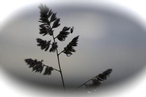 En liten fluga vilar på en växt i den kyliga försommarkvällen.